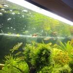Akvárium 26.10.2011 - zelená hladina