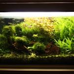 Akvárium 13.11.2011 - zarastené po troch týždňoch neskracovania rastlín a aplikovania CO2