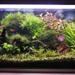 Akvárium 6.2.2012