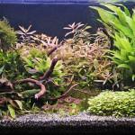 Akvárium 24.2.1013