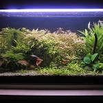Akvárium 18.10.2013 po skrátení rastliniek