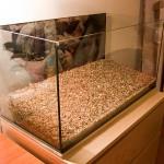 Akvárium s pridaným štrkom