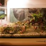 Napúšťanie vody a vloženie rastlín