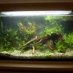 Prvé napustenie akvária