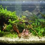 Podoba akvária s otočeným koreňom